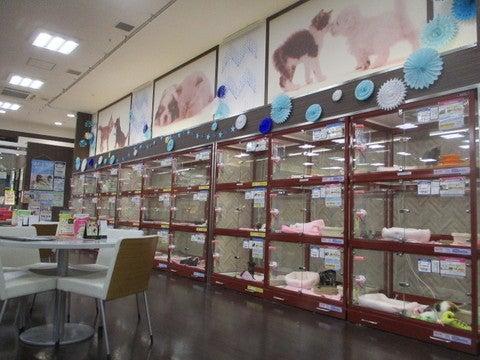 モラージュ菖蒲店 ペットショップのコジマ