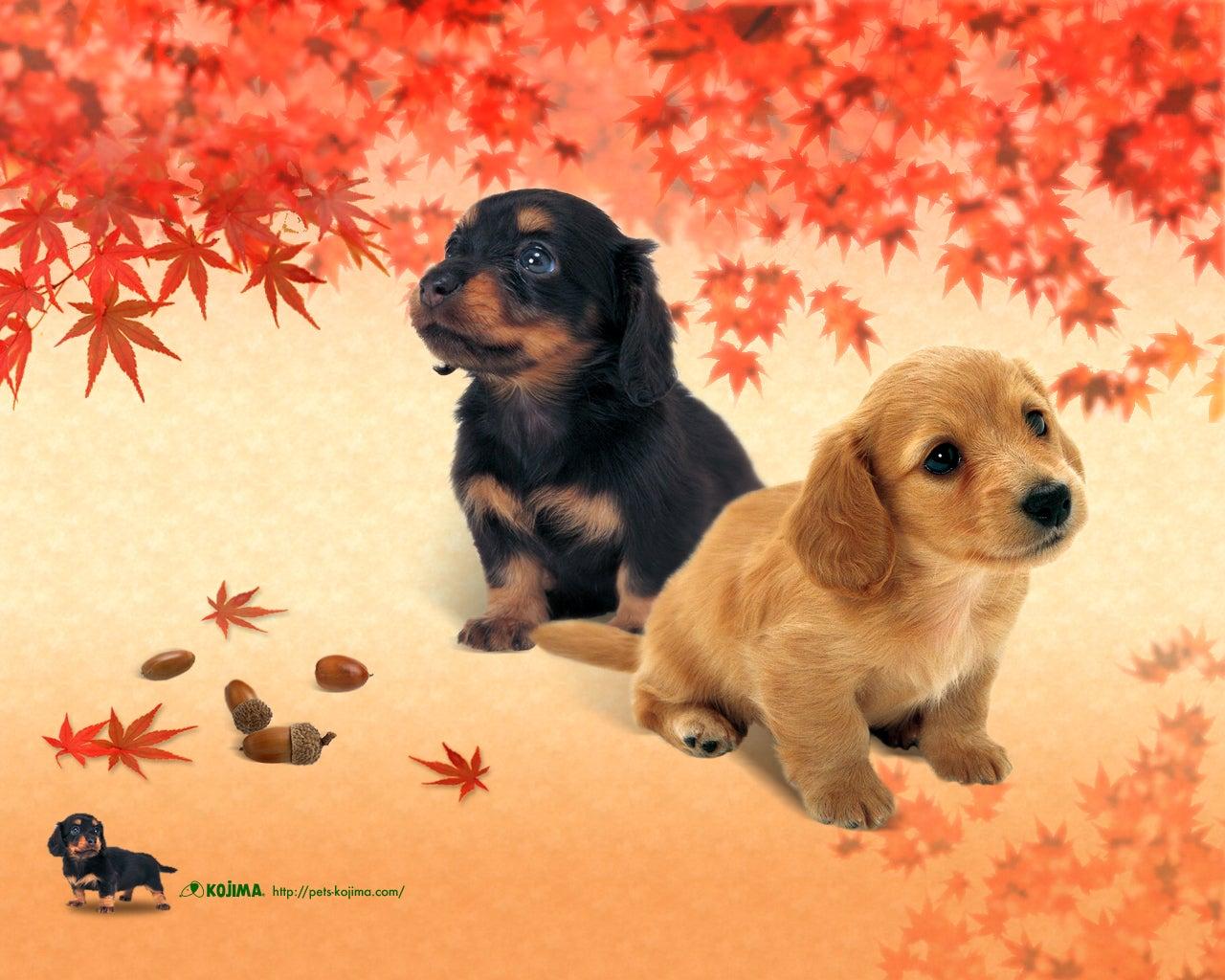 壁紙 犬 ペットショップのコジマ
